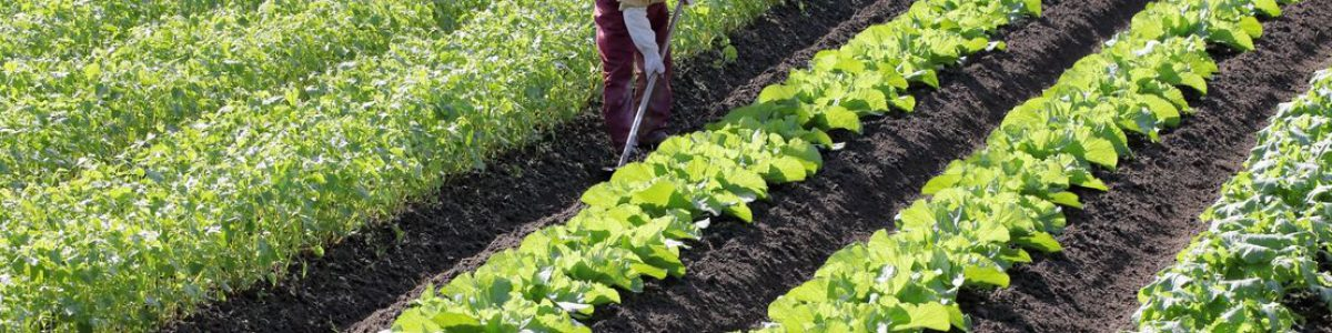 「現場が教科書、農家が先生」というスタンスで臨みます。